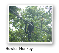 Howler Monky