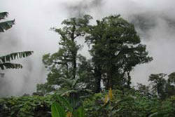 Poas Volcano Lodge Alajuela 4