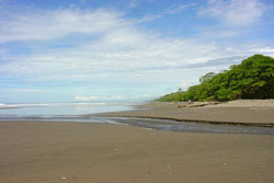 Beach Pacific Ocean