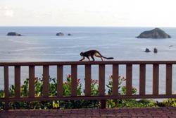 Hotel Costa Verde View
