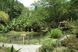 Esquinas Rainforest Lodge 3